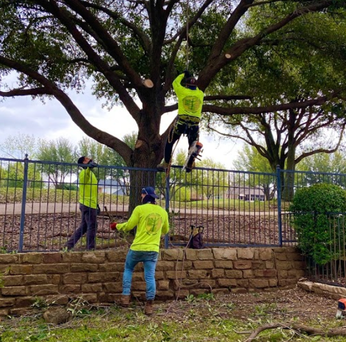 Frisco Texas Tree Surgeons