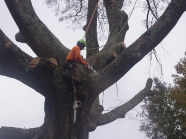 Tree removal in Frisco Texas